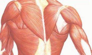 fibromyalgia and myopathy